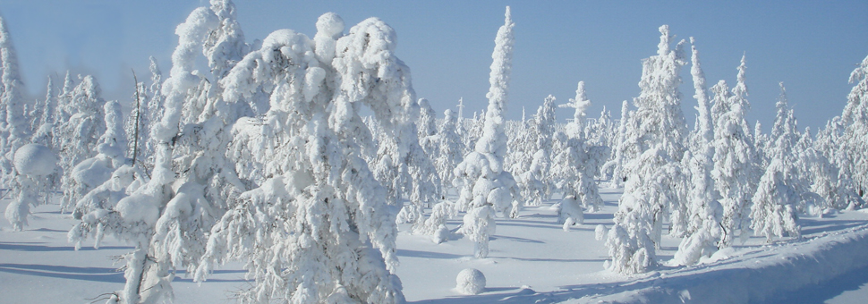 СибирьСибирь без учета территории Дальнего Востока простирается на 13,1 миллионов квадратных километров, имея размер больше, чем вся Европа