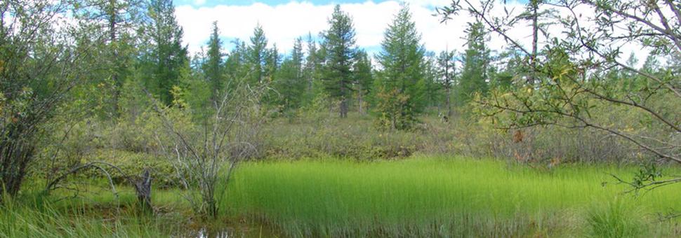 Tundra durante el veranoRusia tiene millones de kilómetros cuádrados de bosques milenarios por donde no ha pasado el hombre